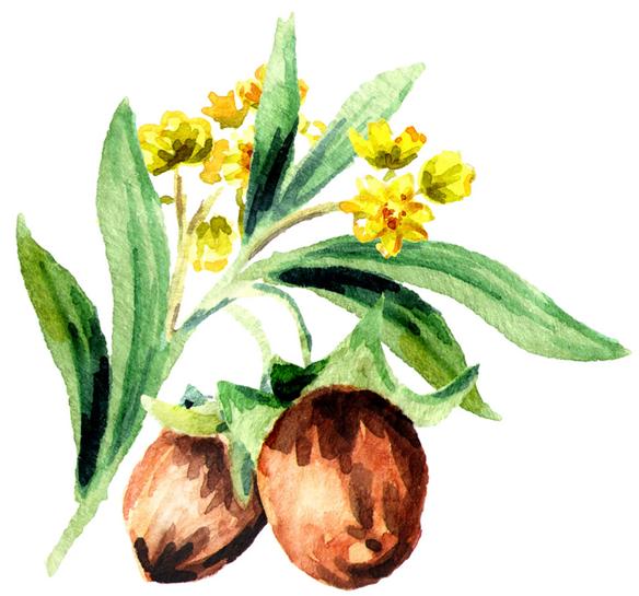 revivogen zlozenie jojobový olej